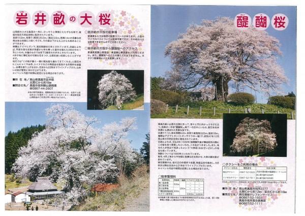 岩井畝大桜