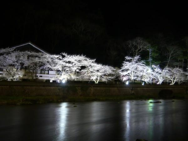 湯原桜ライトアップ