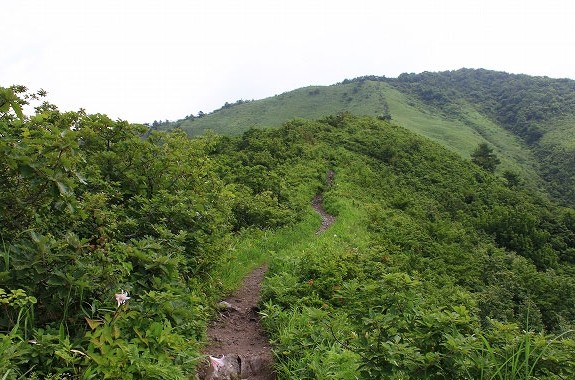 ササユリ登山②