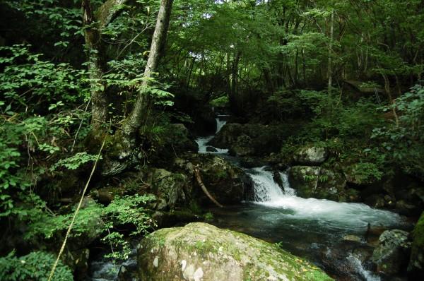 阿波森林公園(遊歩道)
